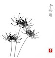 three black chrysanthemum flowers on white vector image vector image