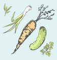 crispy carrot green cucumber and fresh greens vector image