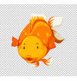 cute goldfish swimming on transparent background vector image vector image