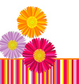Daisy flowers greeting card vector image vector image