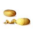 potato peeled 3d of isolated vector image