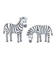 set zebras vector image vector image