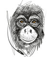 sketch of monkey face vector image