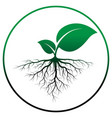 sprout tree with root vector image vector image
