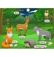 Forest with cartoon animals names vector image vector image
