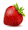 ripe strawberry isolated vector image