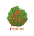 barberry garden berry bush with name vector image vector image