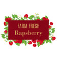 fresh farm raspberry whole with leaves and flowers vector image vector image