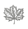 hand drawn maple leaf vintage engrave sketch vector image vector image