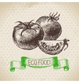 Hand drawn sketch tomato vegetable Eco food vector image vector image