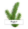 realistic 3d fir branches composition isolated on vector image vector image
