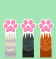 paws up pets cats set design vector image