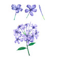 watercolor violet flower for decorative and design vector image vector image