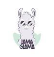 fluffy llama in round sunglasses vector image