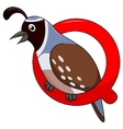 Alphabet Q with quail cartoon vector image vector image