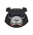 angry bear in green beret evil baribal aggressive vector image vector image