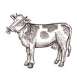 cow farm animal sketch isolated cow on white vector image vector image