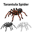 doodle character for tarantula spider vector image vector image