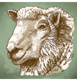 engraving head of sheep retro vector image vector image