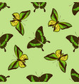 seamless pattern with hand drawn colored papilio vector image
