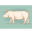a pig vector image vector image