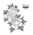 peony flowers composition in japanese tattoo vector image