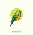 bird colorful line art concept template vector image