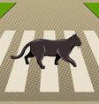 black cat crosses the road pop art vector image vector image