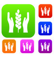 hands and ear of wheat set collection vector image vector image
