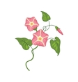 Morning Glory Wild Flower Hand Drawn Detailed vector image