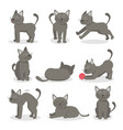 cartoon characters tabby cat set vector image vector image