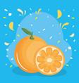 fresh orange citrus fruit with confetti splash vector image vector image
