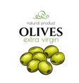 hand drawn olives icon badge vector image vector image