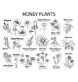 honey plants black ink sketches set vector image vector image