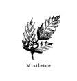 mistletoe branch hand drawn on white vector image