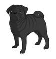 color image a black pug vector image vector image