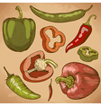 engraving peppers retro vector image vector image