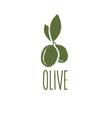 grunge olive design template vector image