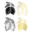 hand drawn golden fruits set vector image