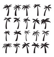 set icons palm trees isolated on white vector image vector image