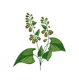 Wild Flower Hand Drawn Detailed vector image vector image