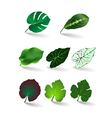 leaves set eps 10 vector image vector image