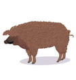 mangalica pig cartoon vector image vector image
