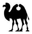 silhouette of a two-humped camel vector image vector image