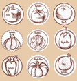 Sketch set of vegetable logos vector image vector image