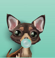 dog inflating a chewing gum vector image vector image