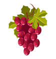 grape bunch isolated berry winemaking plantation vector image