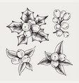 vintage set of hand drawn mistletoe vector image vector image