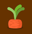 carrots growing isolated fresh vegetables in vector image