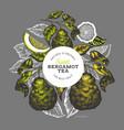 bergamot branch design template kaffir lime logo vector image vector image